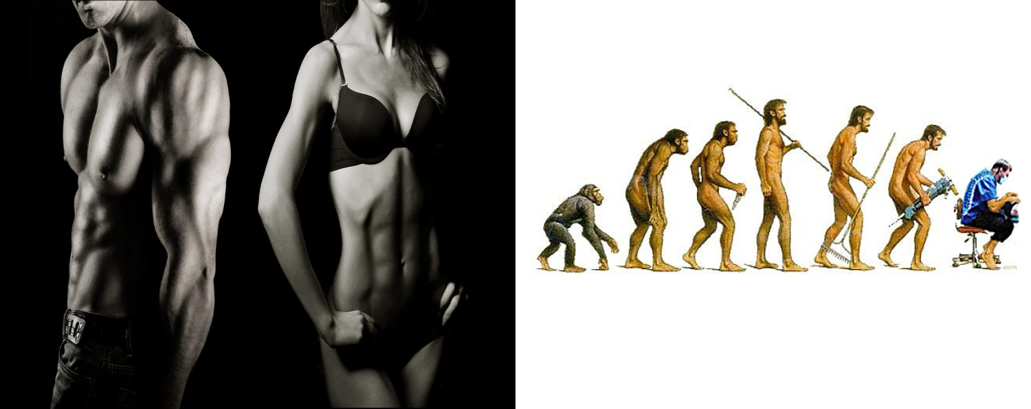 Left: Fit man and woman. Right: Homo-sapien evolution from ape to dentists
